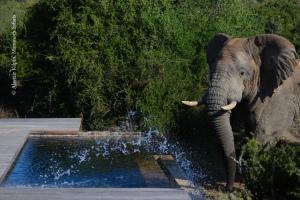 news-elephant-pool01