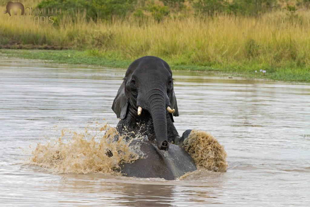 Elephant, Savanna, Sabi Sands