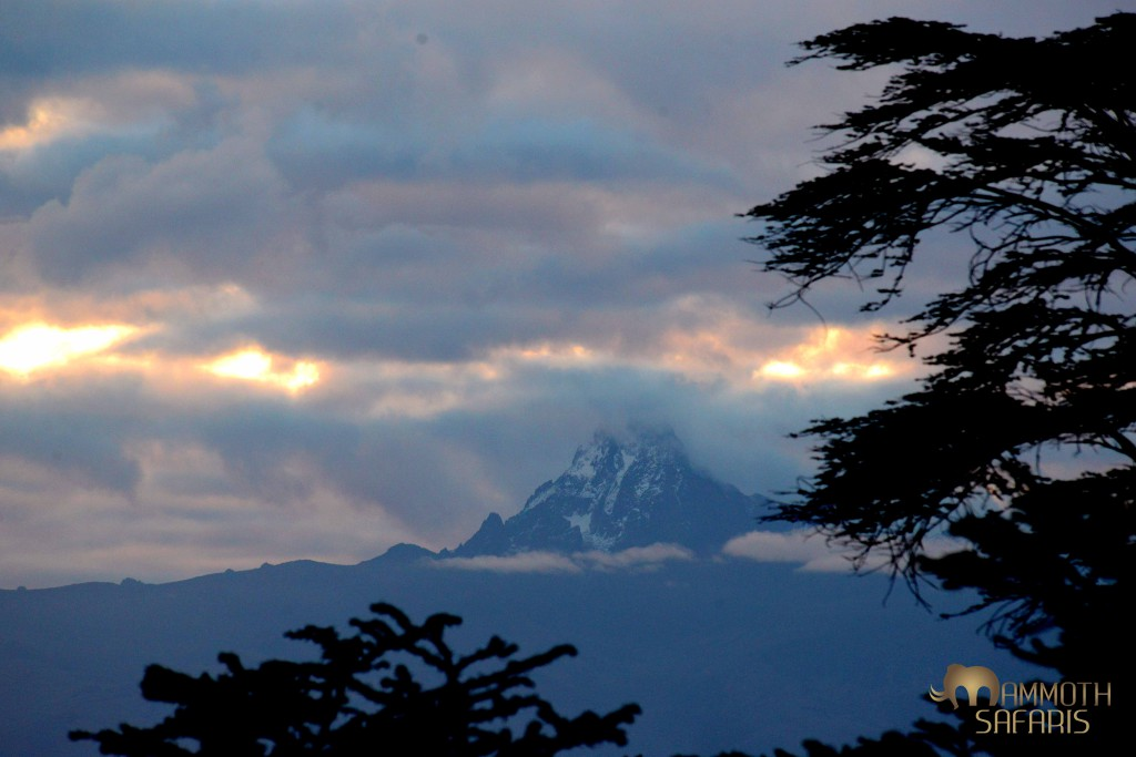 one has to be up early to catch a glimpse of this incredible mountain