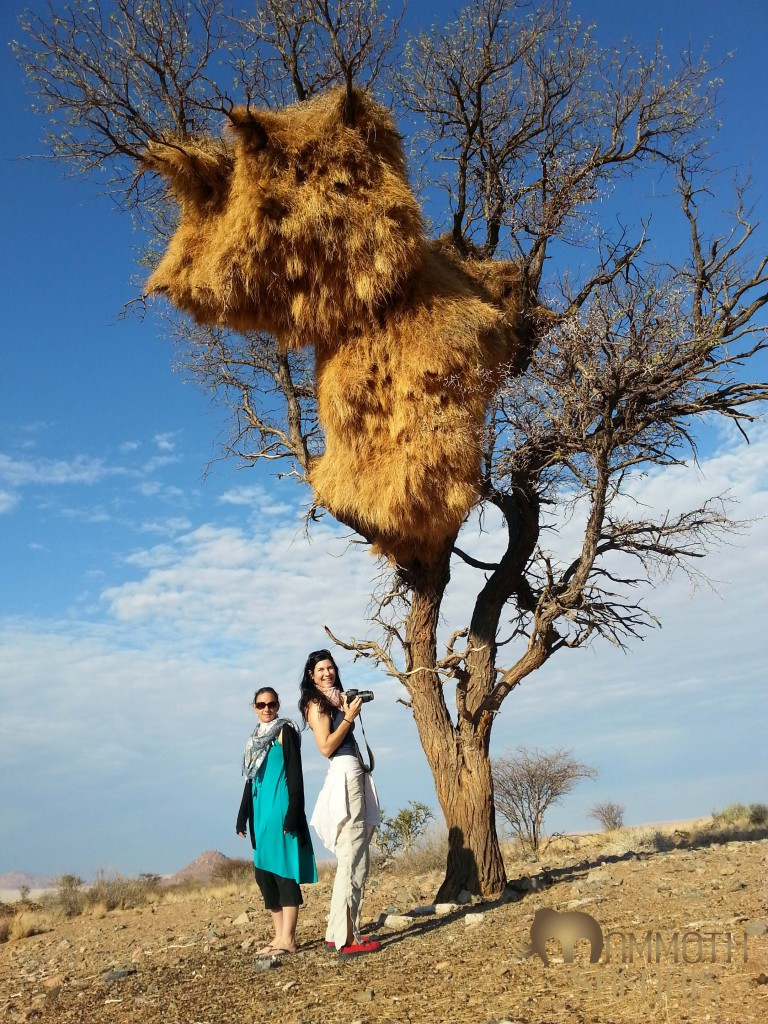 Two incredible women posing beneath the impressive Sociable Weaver nest - purposefully offbeat to get them all in!