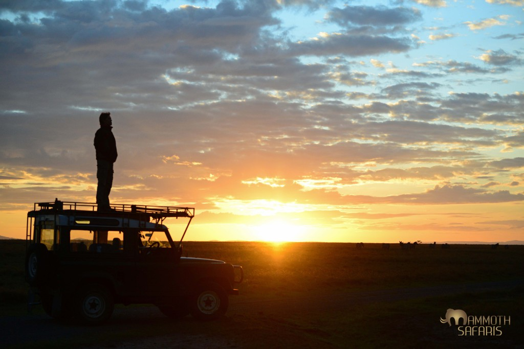 After photographing the herd of zebras at dawn I took a moment to perch on our trusty landy to enjoy the elevated view (thanks Mark)