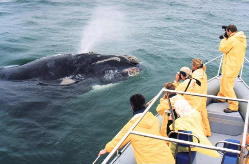 bushbeach-grootbos-whale-watching