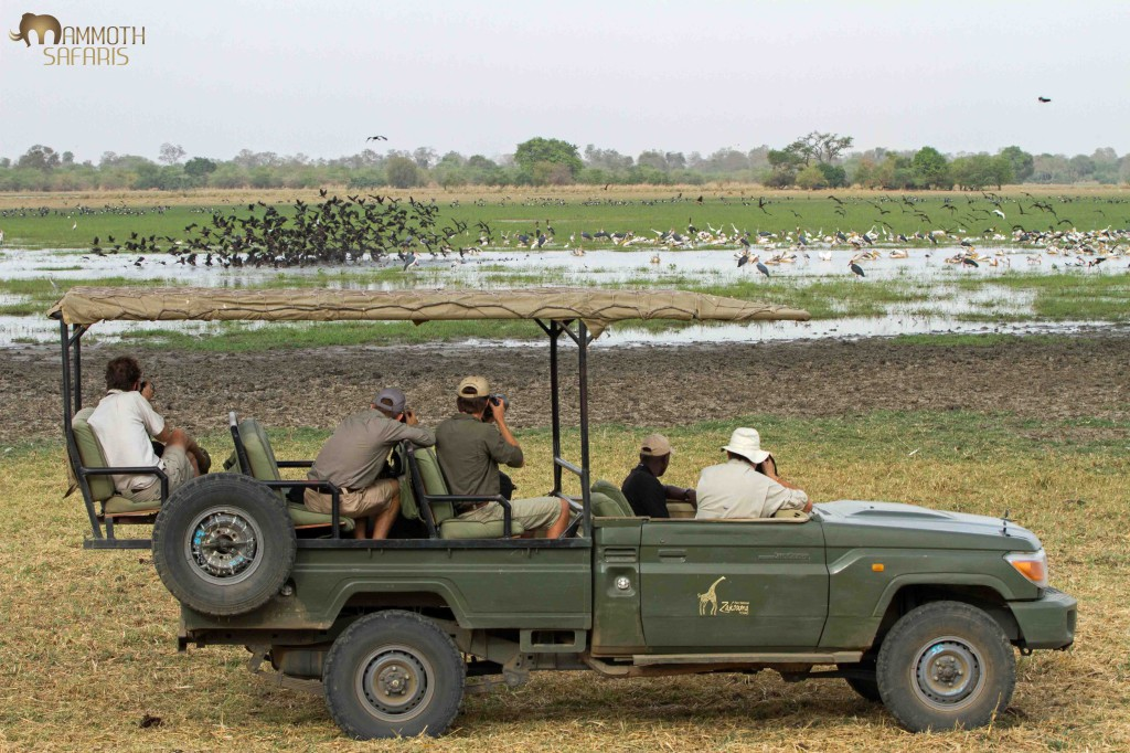 This was the first scene that greeted us just minutes from the airstrip! Machtour pan was filled with thousands of Spur-winged Geese and Comb Ducks along with Kordofan Giraffe and Buffalo coming down to quench their thirst.