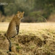 Top leopard spotting spots